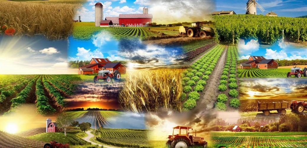 Торове, семена и препарати